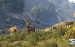 official screenshot elk graze in the grass