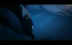 trailer 6 killer whale lurks