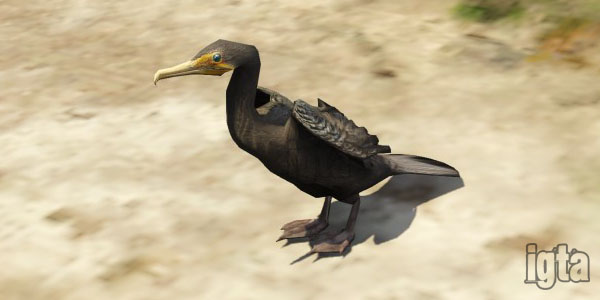 GTA 5 Cormorants