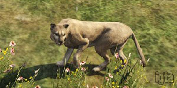 GTA 5 Cougars
