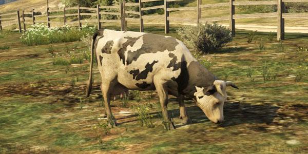GTA 5 Cows