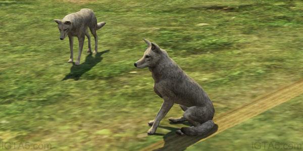 GTA 5 Coyotes