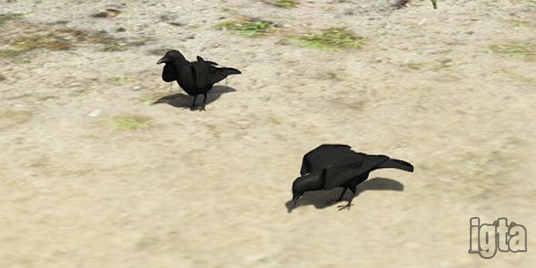 GTA 5 Crows