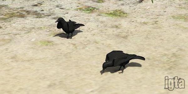 GTA 5 Crows
