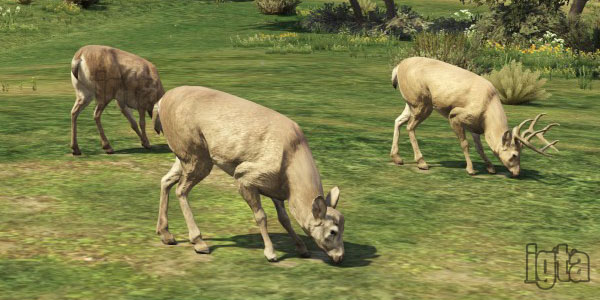 GTA 5 Elks/Deer