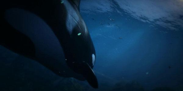 GTA 5 Killer Whales