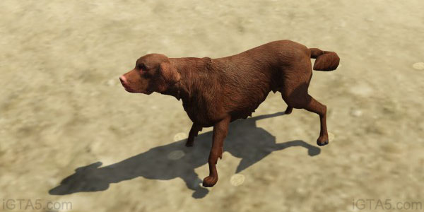 GTA IV: how to get a dog - (GTA IV dog) - YouTube |Gta 5 Dog Breeds