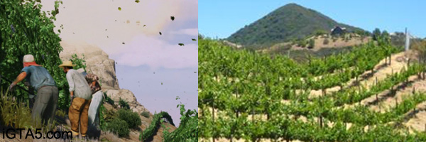 Vineyards and wineries of Malibu