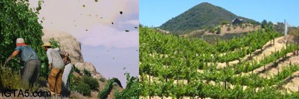 Vineyards and wineries of Malibu