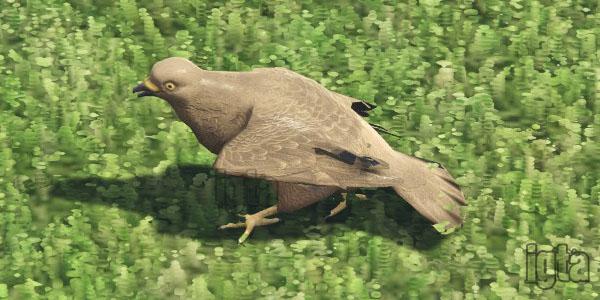 GTA 5 Pigeons