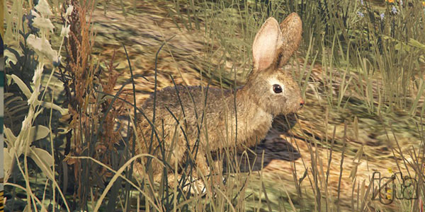 GTA 5 Rabbits