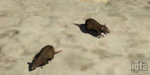 GTA 5 Rats