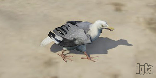GTA 5 Seagulls
