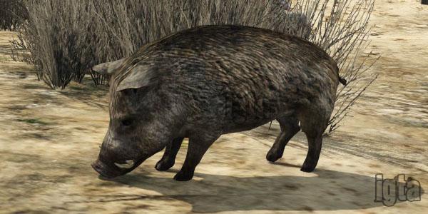 GTA 5 Wild Boars